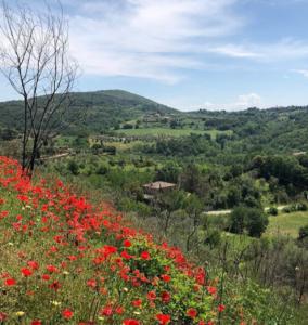 TuscanHillside-RetreatToTuscany